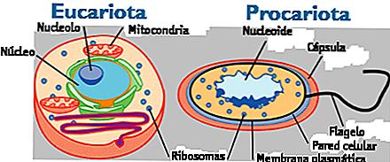 Le cellule eucariote e procariote 1