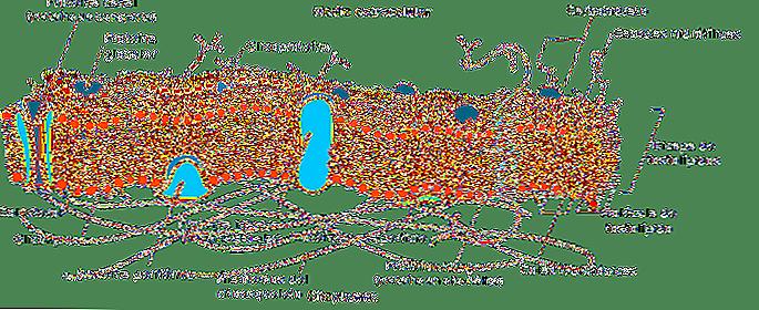 Le cellule eucariote e procariote 6