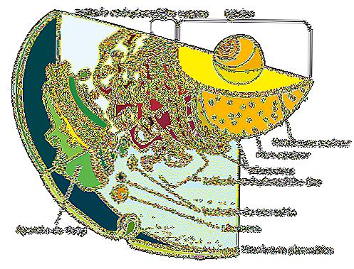 Le cellule eucariote e procariote 9